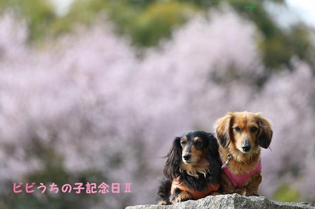 ビビうちの子記念日Ⅱ.jpg