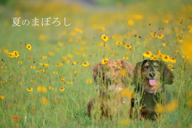 夏のまぼろし.jpg