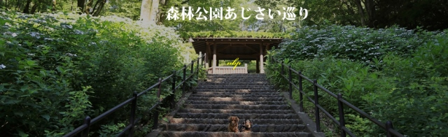 森林あじさい巡りⅡ.jpg