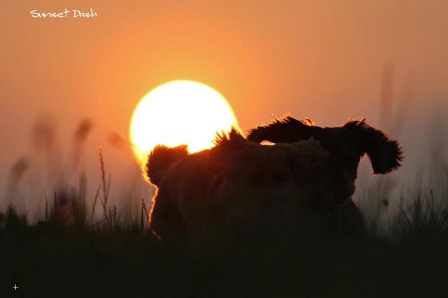 Sunset Dash.jpg